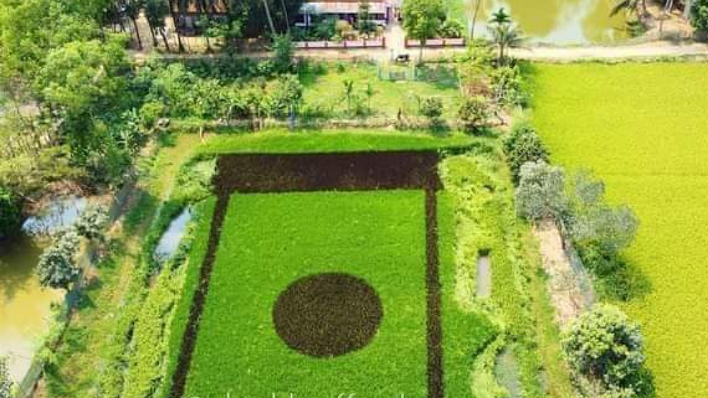 শেরপুরে শস্যচিত্রে জাতীয় পতাকা