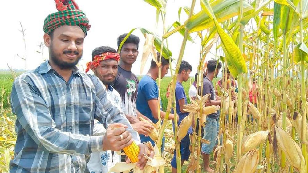 দরিদ্র কৃষকের ভূট্টা তুলে বাড়ি পৌঁছে দিলো ছাত্রলীগ